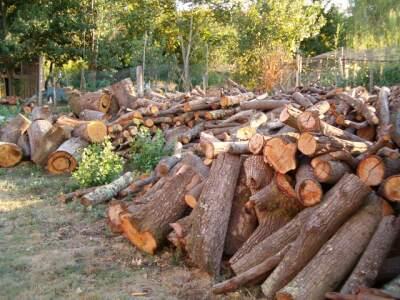 La legna per il forno